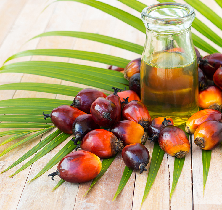palm oil supplier image
